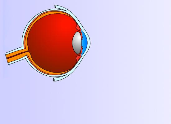 VISION LENT Ópticas – ojo humano